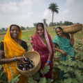 "IFPRI's DG, Shenggen Fan Blogs About Why ""Multisectoral Approaches Are Key to Improve Nutrition in India"""